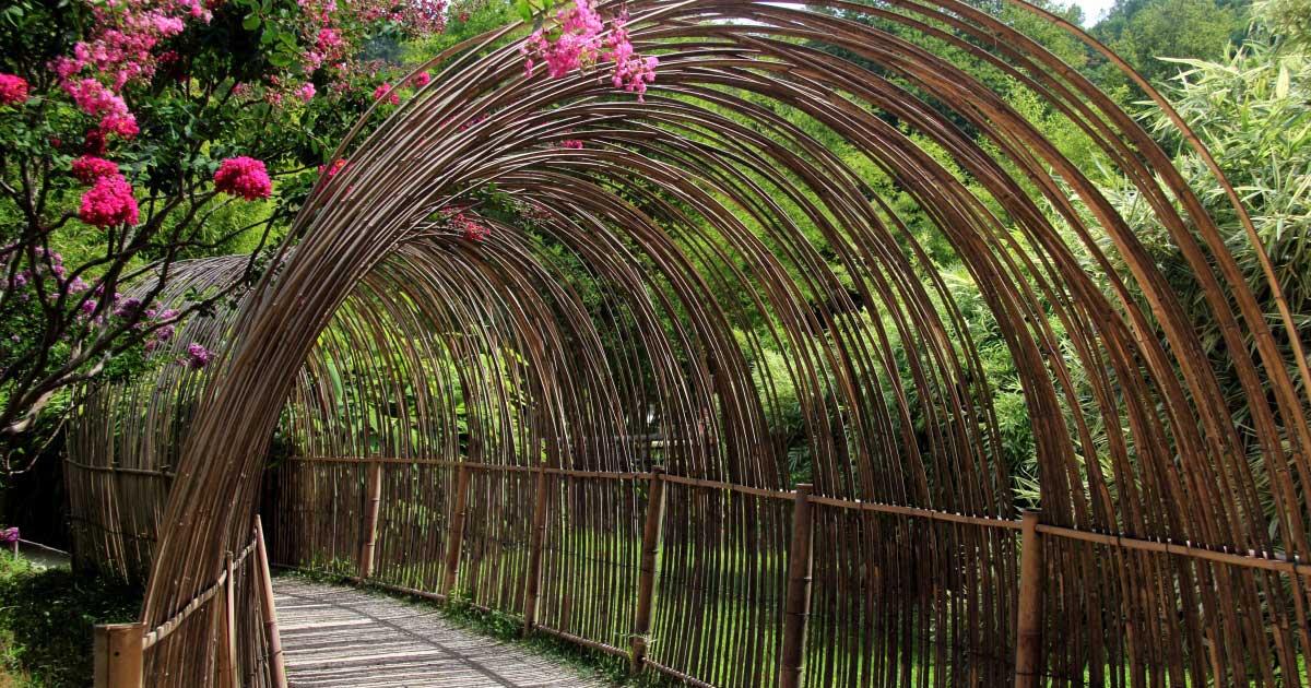 bambouserae-anduze-gite-sud-de-france